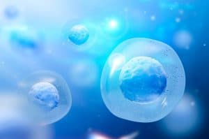 Células-tronco x Infertilidade