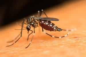 Gestante: saiba como se proteger do Zika vírus