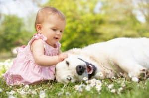 O cão é o melhor amigo do homem…e do bebê?
