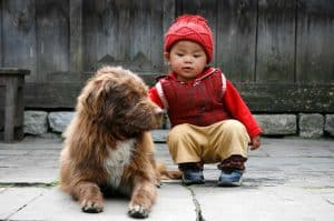 O cão é o melhor amigo do homem…e do bebê? – Parte 2