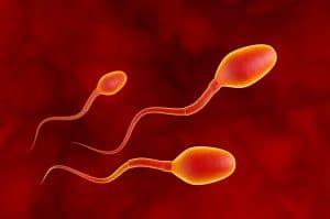 Técnicas para obtenção de espermatozoides na FIV