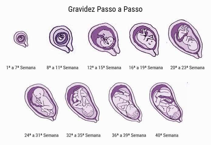 tamanho feto 1 mes